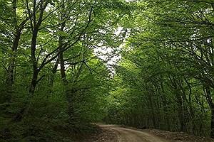 تصویر  ۱۹ ذخیرهگاه جنگلی در چهارمحال و بختیاری شناسایی شد
