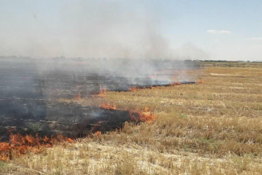 هشدار مدیریت بحران در خصوص آتش سوزی مزارع غلات