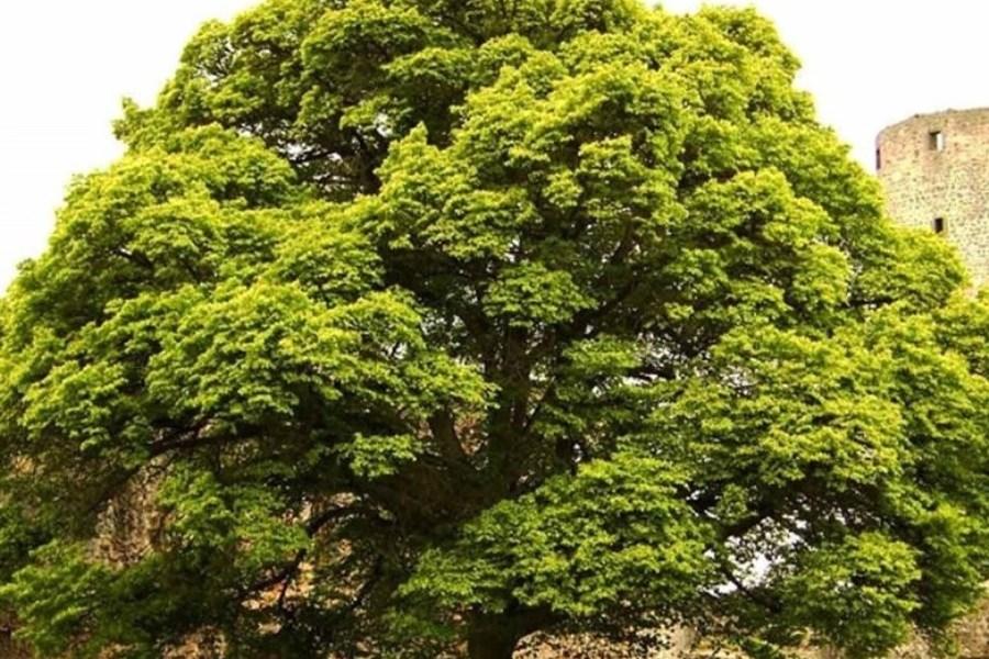 تست شخصیت شناسی با انتخاب یکی از این 9 درخت!