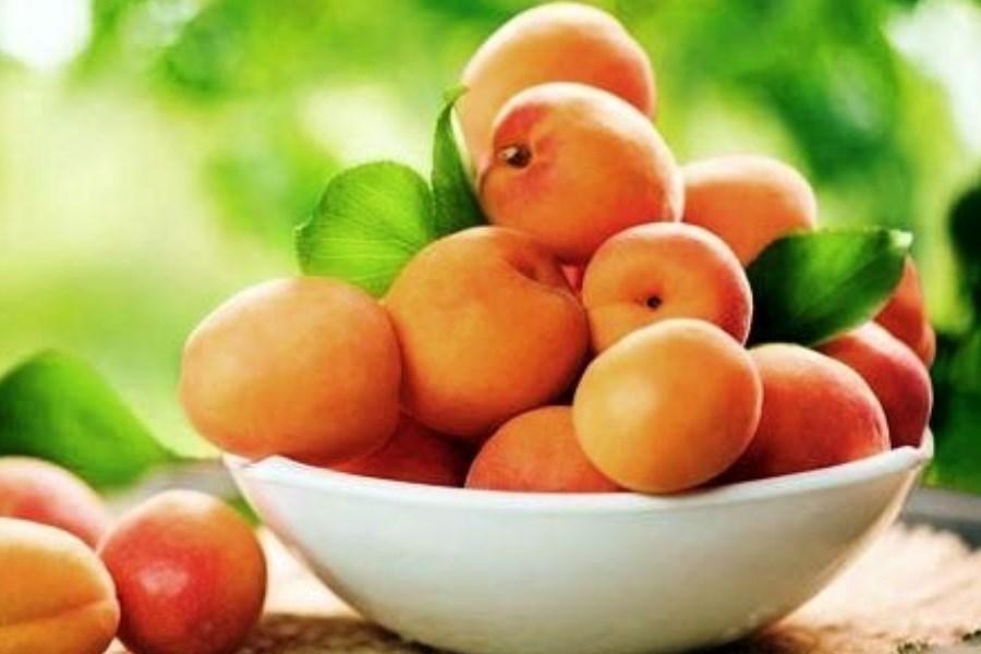 این میوه را نباید بعد از غذا خورد!