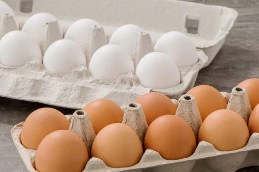 چرا تخم مرغ گران شد؟