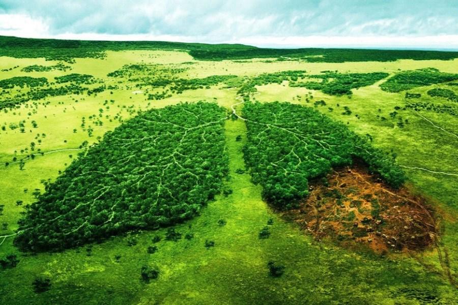 محیط زیست و مسئولیت ما