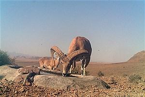 تصویر  راهاندازی  پاسگاه محیط بانی در منطقه شکار ممنوع  استند