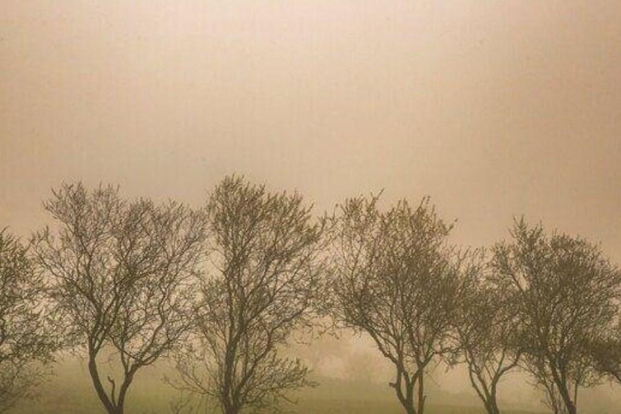 گرد و خاک در بوشهر