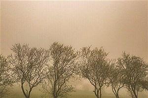 تصویر  گرد و خاک در بوشهر