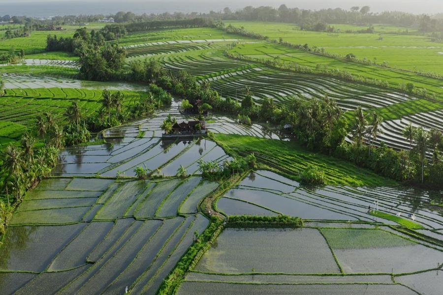 مدیریت مصرف آب کشاورزی با تجهیز و نوسازی اراضی شالیزاری