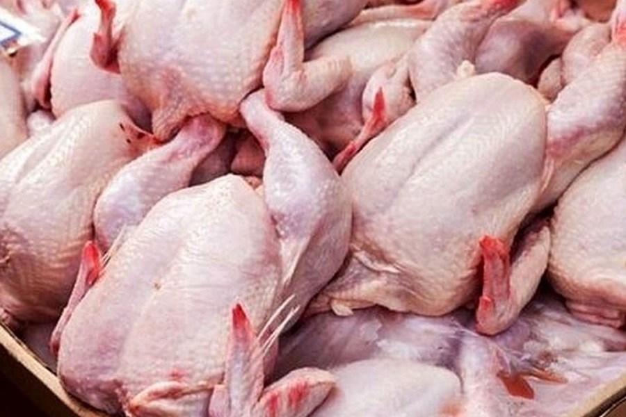 تصویر علت افزایش مجدد قیمت مرغ