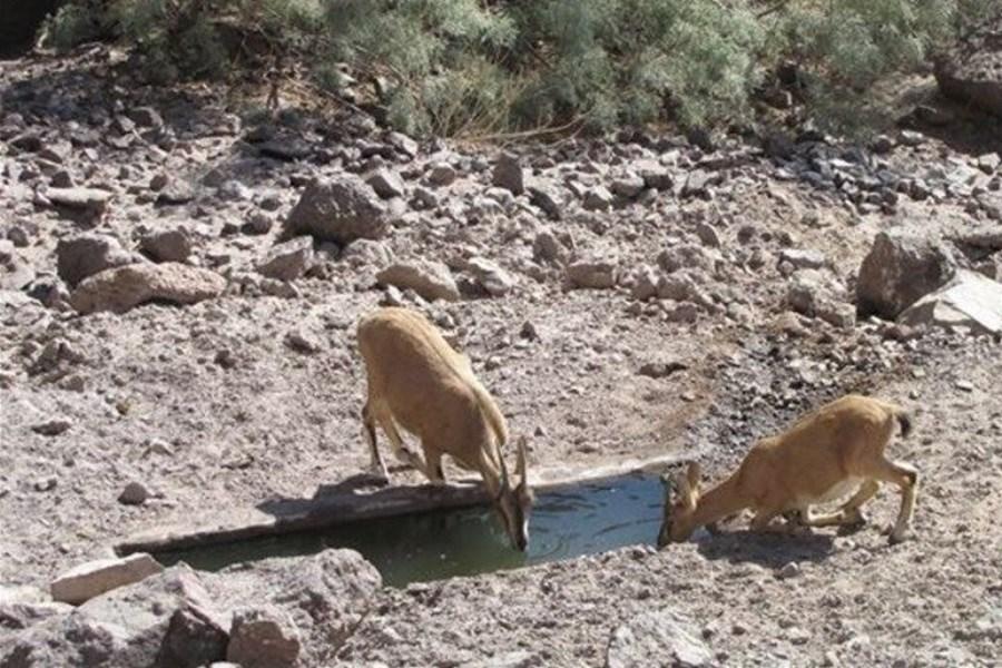 تصویر حفاظت از گونههای جانوری در خشکسالی امسال