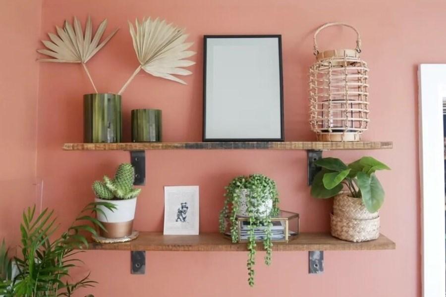 تصویر ۱۰ ایده خلاقانه برای چیدمان گیاهان آپارتمانی در خانههای کوچک