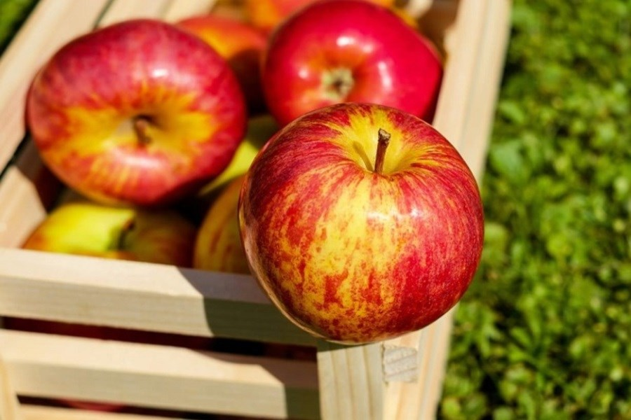 سیب؛ میوهای برای جلوگیری از ابتلا به دیابت