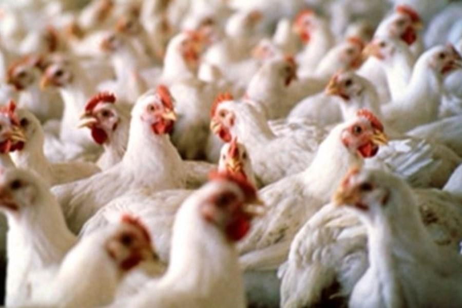به علت قطعی برق تولید تخم مرغ در روز 20 کارتن کاهش یافت