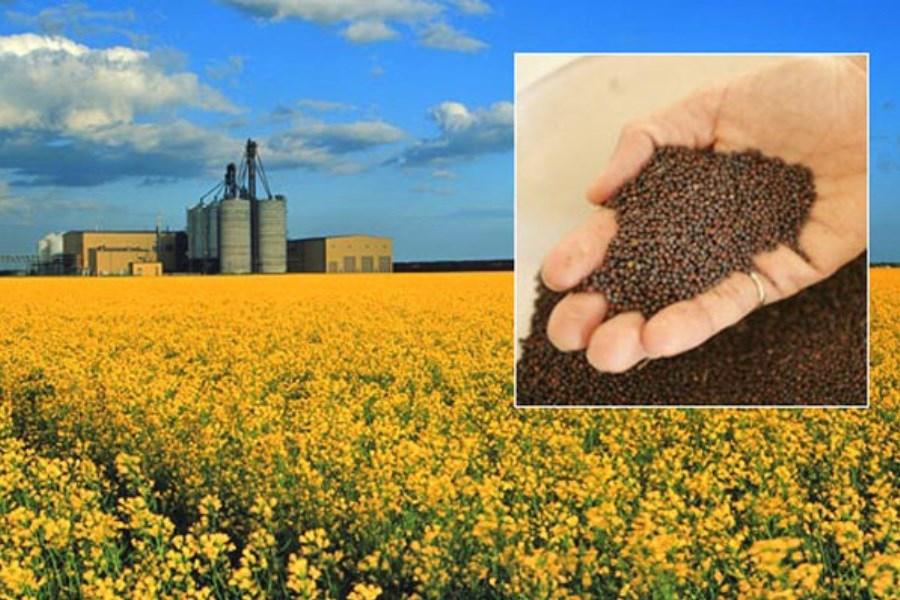 واردات ۳۰۰ هزار تن دانه روغنی توسط شرکت بازرگانی دولتی ایران