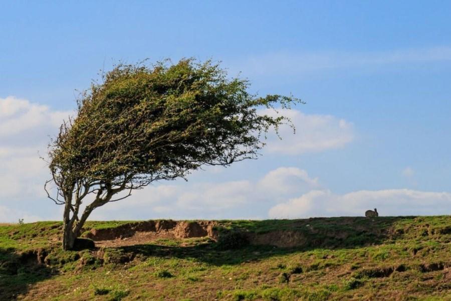 وزش باد در زنجان جان گرفت
