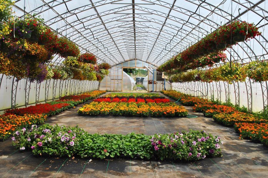 گیلان؛ مستعد در توسعه صنعت گل و گیاه کشور