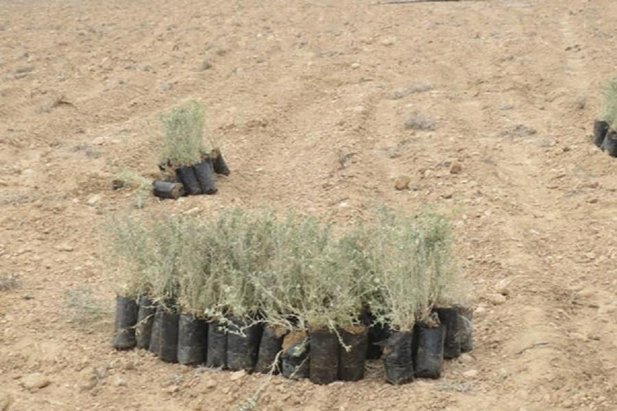 یکی از دلایل بیابانزایی در ایران سدسازی غیر اصولی است