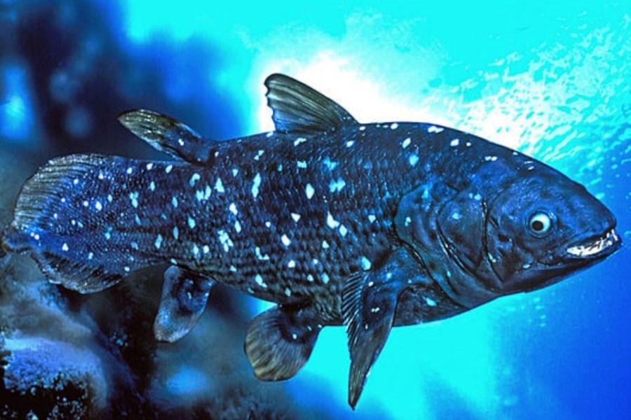 زیست شناسی عجیب یک ماهی با عمر یک قرن!