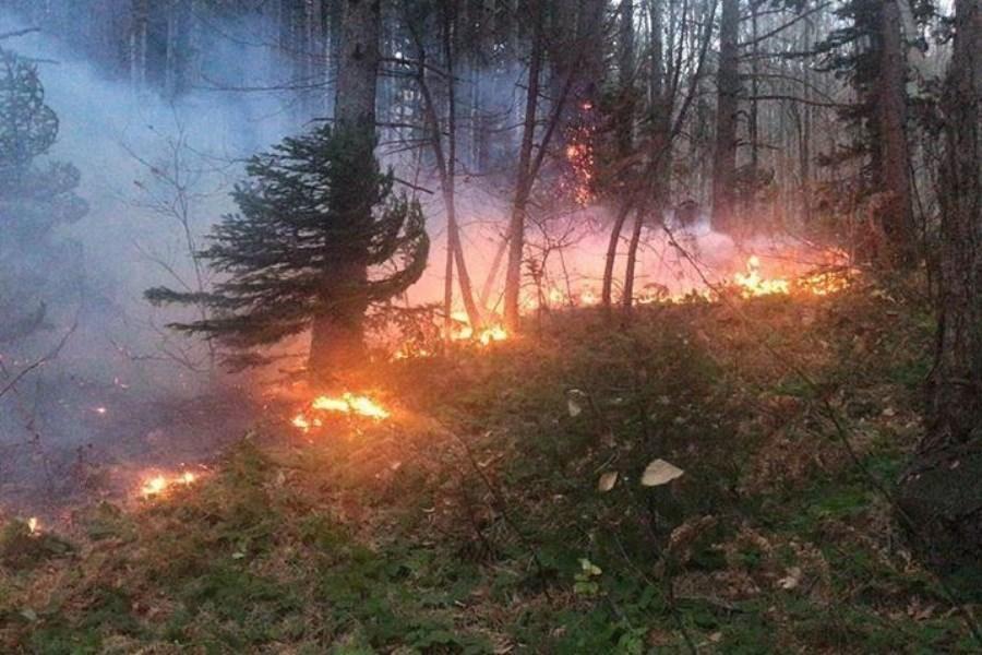 تصویر آتش سوزی جنگل های «شبلیز» شهرستان دنا مهار شد