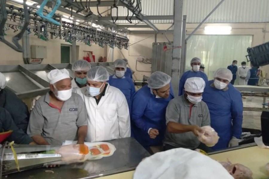 آغاز طرح طرح بهبود کیفیت بهداشتی گوشت مرغ در گلستان