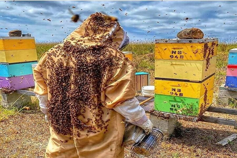 تولید عسل در خراسان شمالی