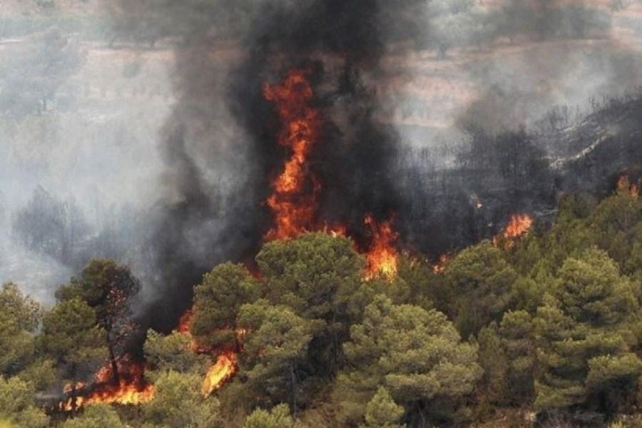 ۵۰۴ هکتار از مراتع کردستان در آتش سوخت