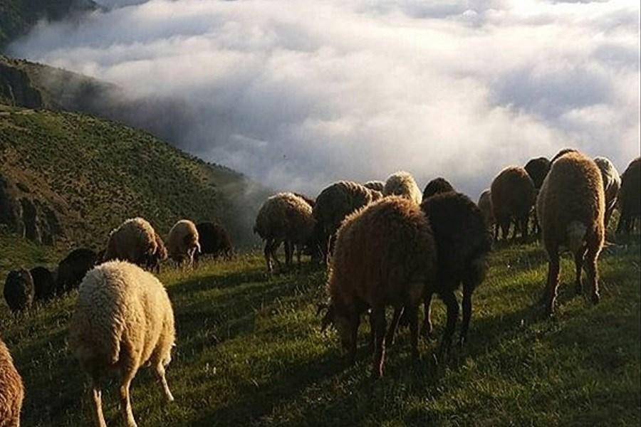 تلف شدن۳۰۰ راس گوسفند در مانه و سملقان