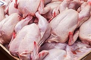 تصویر  مرغ را بالاتر از این قیمت نخرید!