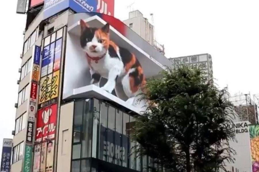 گربه غول پیکر روی بیلبورد خبرساز شد +فیلم