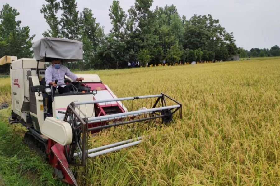 آغاز برداشت مکانیزه برنج جدید مازندران