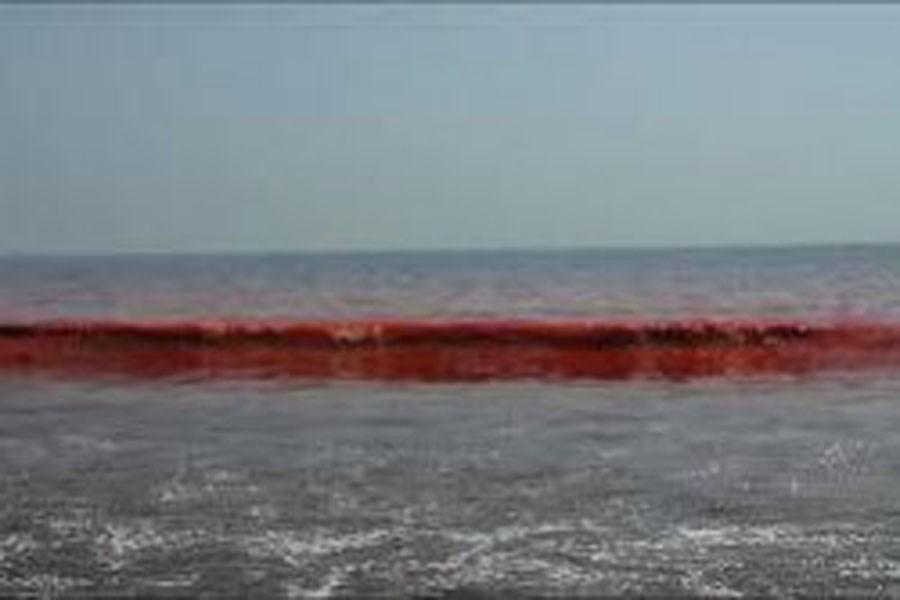 پیدایش کشند قرمز یا شکوفایی جلبکی در سواحل شرقی و جنوبی جزیره کیش
