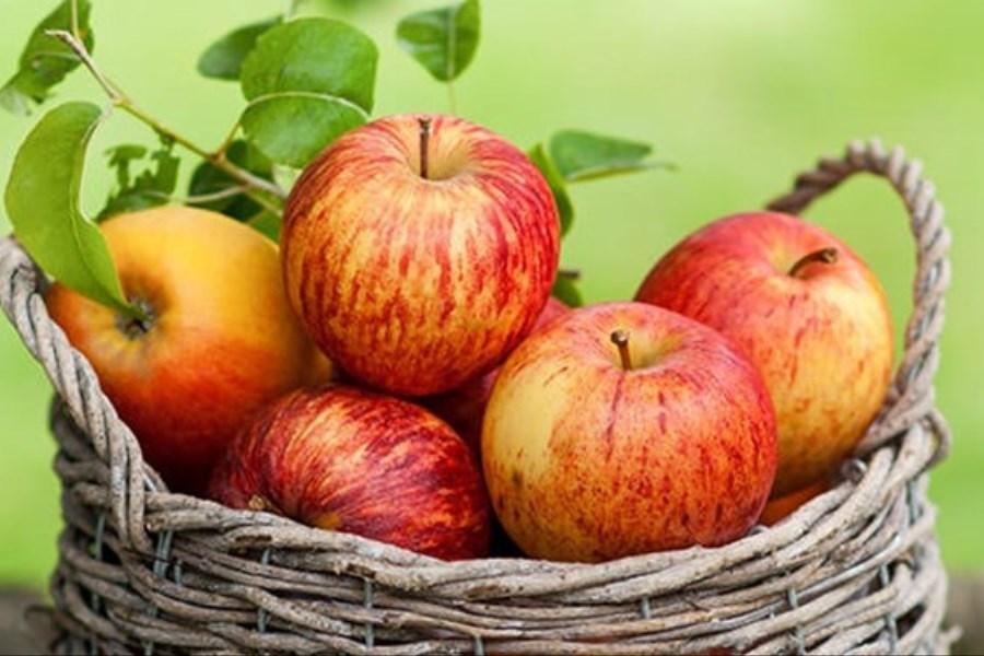 میزان واردات موز و صادرات سیب کشور
