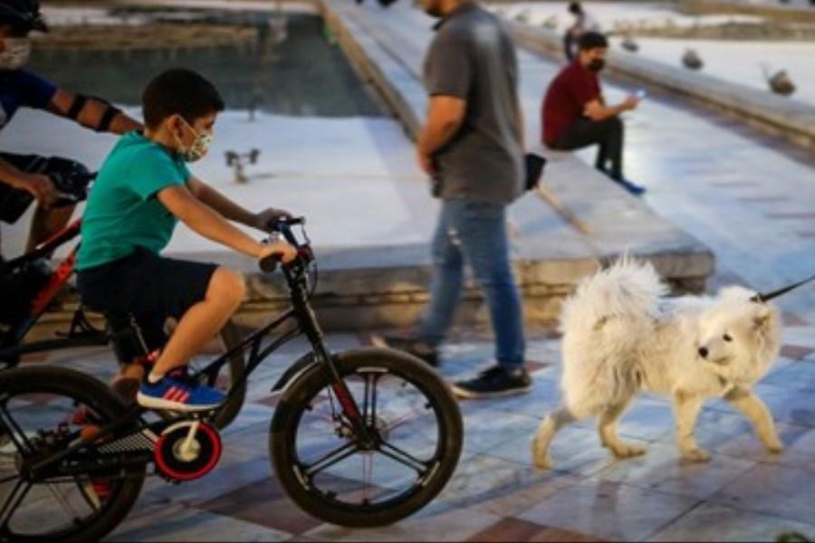 مروری بر طرح محدودیت سگ گردانی در پارکها