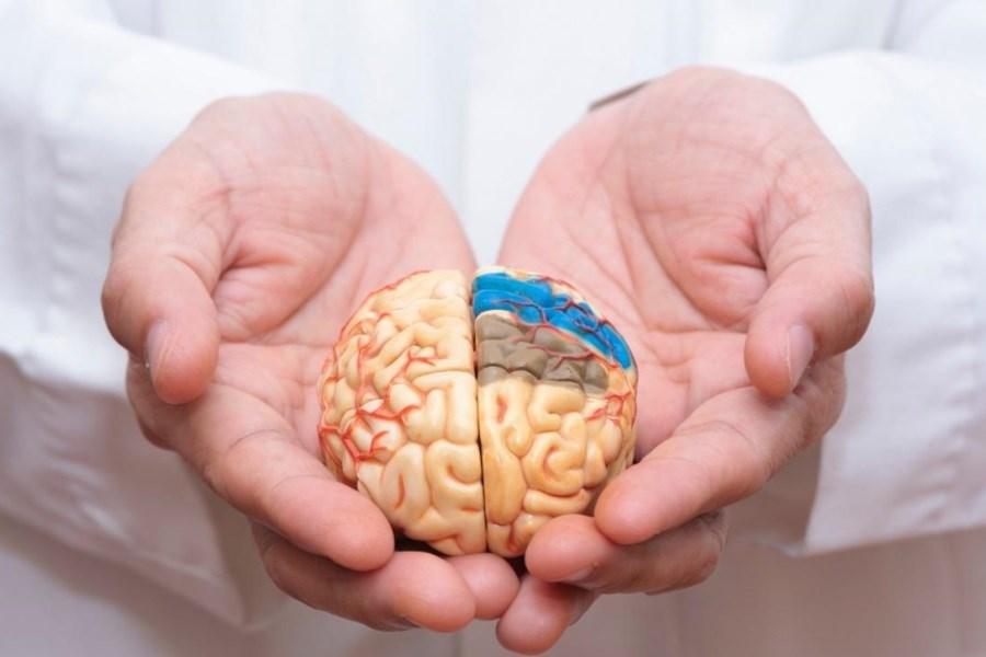 مواد غذایی مفید برای حافظه