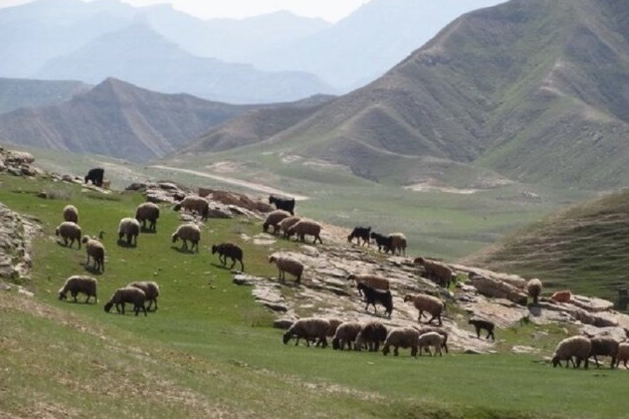 ممنوعیت چرای غیر مجاز دام در مناطق حفاظت شده دیزمار آذربایجان شرقی