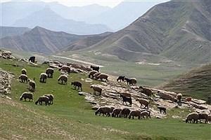 تصویر  ممنوعیت چرای غیر مجاز دام در مناطق حفاظت شده دیزمار آذربایجان شرقی