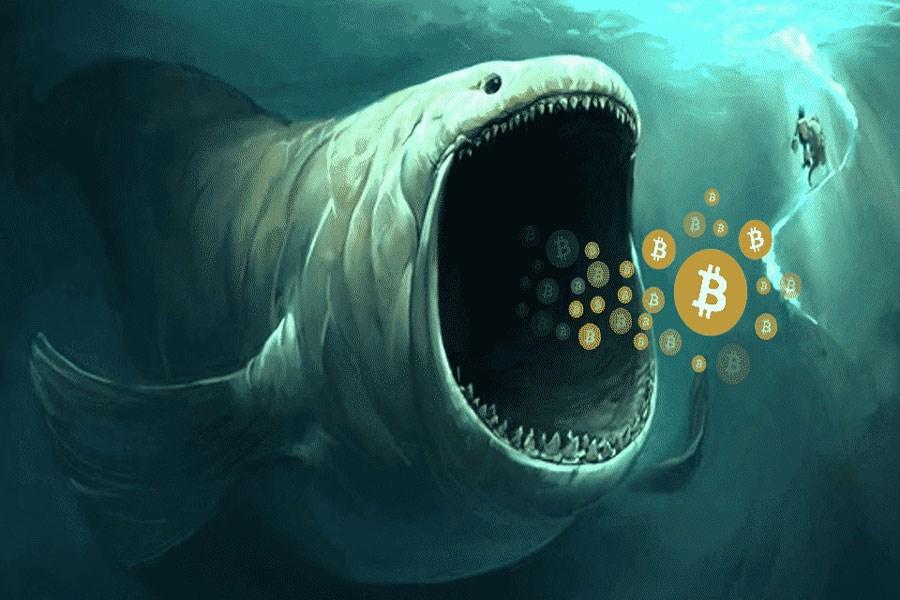 یک نهنگ در طول آخر هفته 30000 بیت کوین خرید