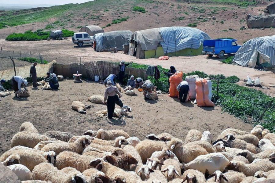 تصویر آغاز روند واکسیناسیون عشایر استان کرمانشاه علیه ویروس کرونا