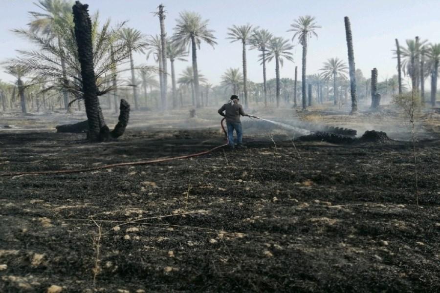 تصویر باغ های انبه و خرمای روستائیان نودژ کرمان در آتش سوخت