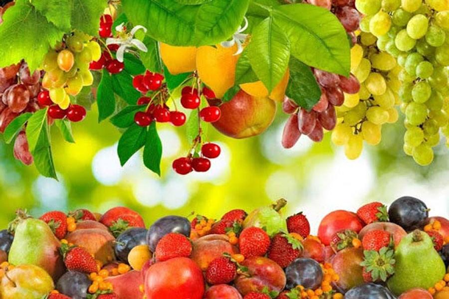 تصویر خوراکیهای انرژی زا برای تابستان