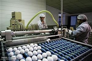 تصویر  سریال گرانی ها ادامه دارد / قیمت هر مرغ تخم گذار صد هزار تومان