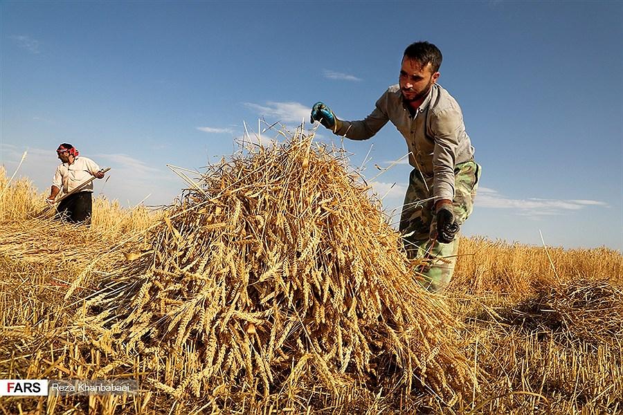 تبدیل 35 درصد محصولات کشاورزی به ضایعات/ هندوانه پرآب ترین محصول، صدرنشین صادرات