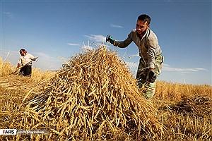 تصویر  تبدیل 35 درصد محصولات کشاورزی به ضایعات/ هندوانه پرآب ترین محصول، صدرنشین صادرات