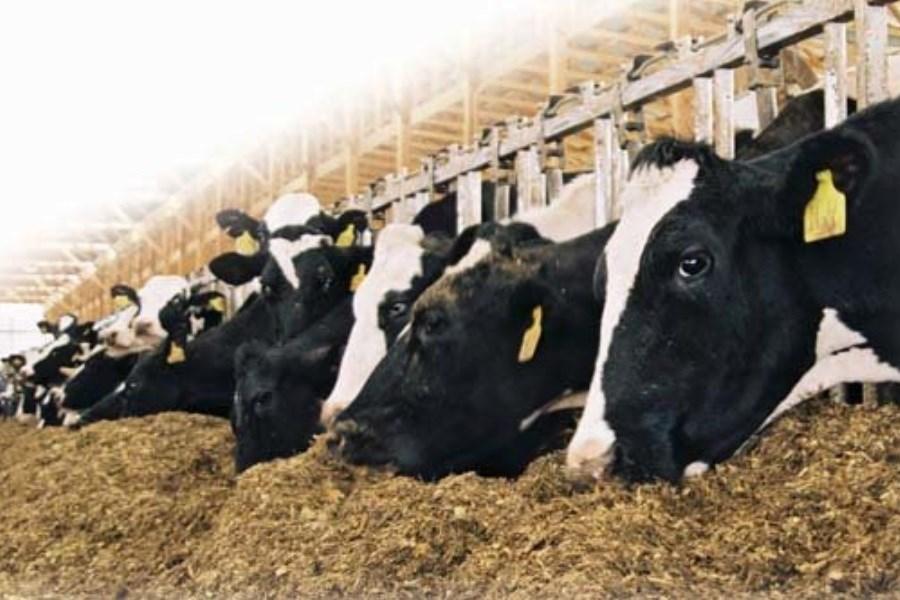 خطراتی که دامپروری و کشاورزی مازندران را تهدید میکند