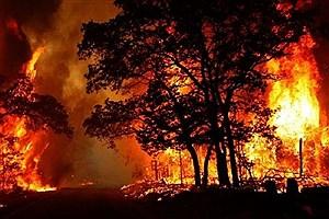 تصویر  آتشسوزی های زنجیرهای جنگلها