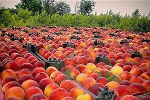 تصویر  افزایش بهره وری محصولات زراعی و باغی کشت و صنعت مغان اردبیل