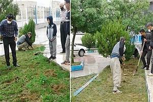 تصویر  همدان، رتبه نخست کشور در تولید گیاه گلرنگ