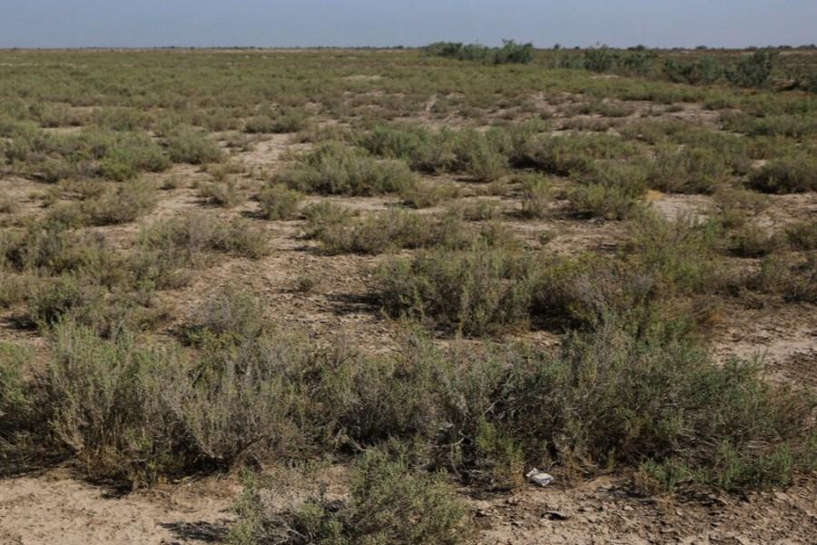 بوتهکاری ۳۸۰۰ هکتار از حاشیه دریاچه ارومیه در آذربایجانشرقی