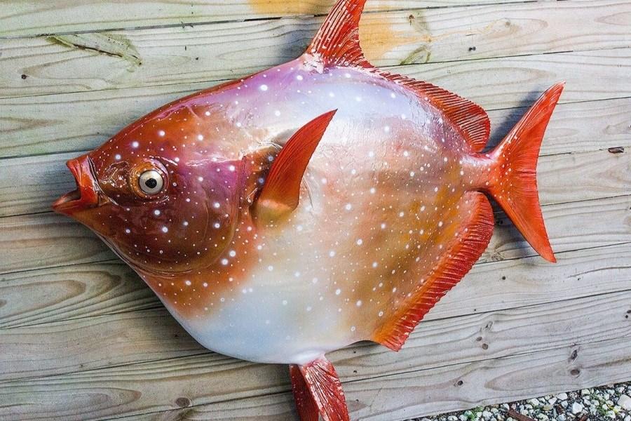 کشف ماهی عجیب در سواحل آمریکا