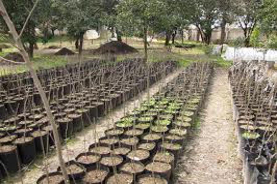 ملایر پیشرو در تولید نهال و توسعه جنگل کاری