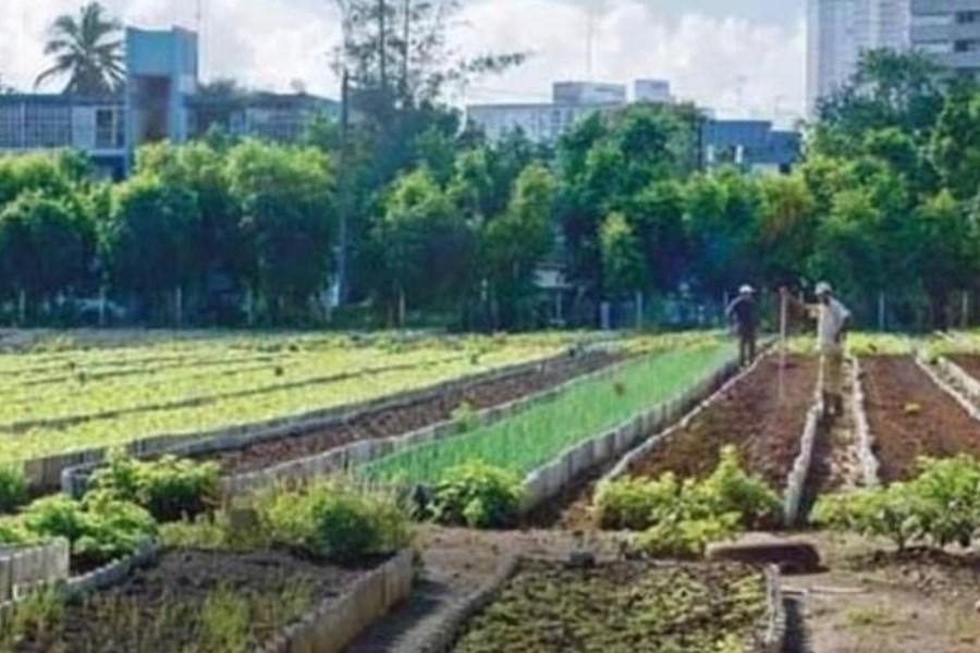 هدررفت سالانه یک میلیارد مکعب آب برای ضایعات کشاورزی