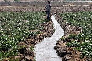 تصویر  خوزستان قطب کشاورزی کشور / بی مدیریتی عامل اجرایی نشدن طرح امنیت غذایی